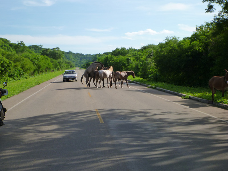 Horses mating in the road, on the way to the Bolivian border ...