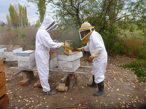 Beekeeping at the finca (San Rafael)