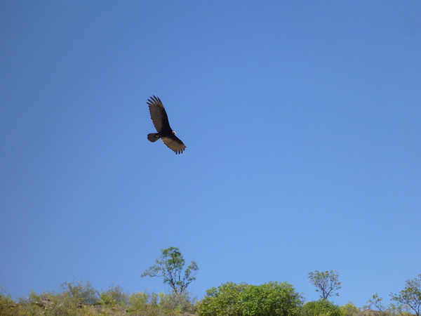 condor right above us, near El Vergel