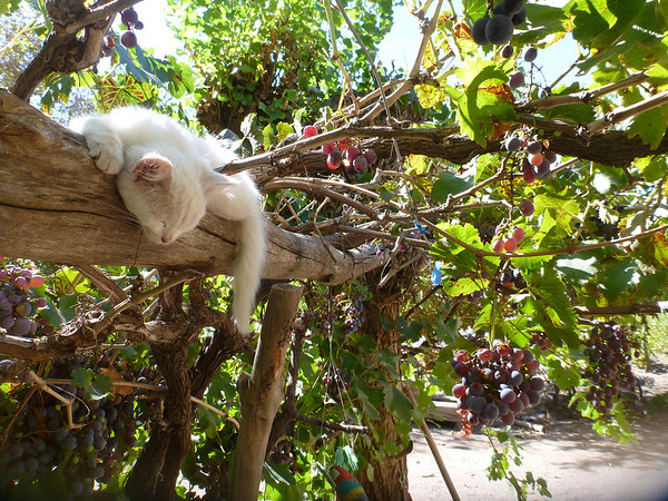 Kitty sleeps in some precarious spots (San Rafael)