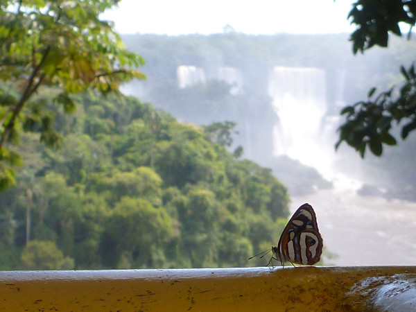 Butterfly  (Foz do Iguassu)