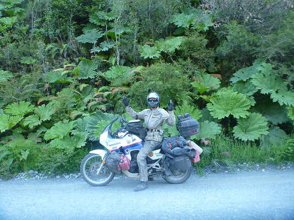Mike shows how big those leaves are, on the Carretera Austral