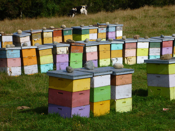 Colorful bee boxes, Chiloé