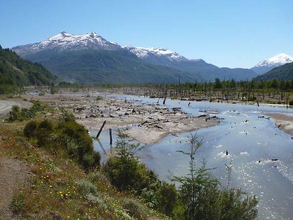 dead forest, Carretera Austral