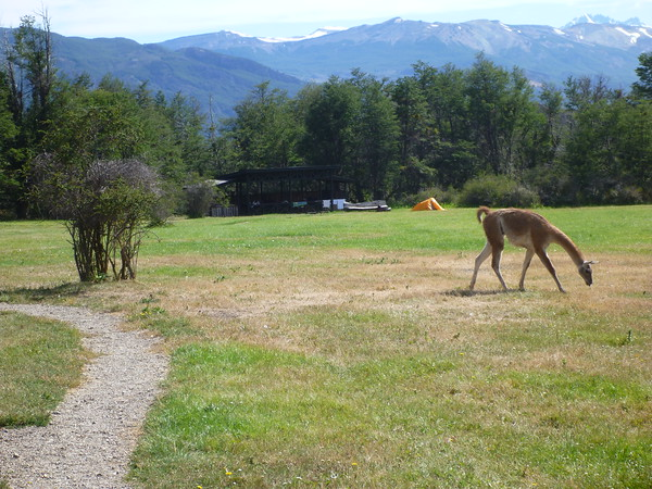 Guanacos were a common sight at Los West Winds campground.