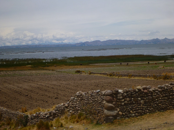 fields on the shores of Lake Titicaca